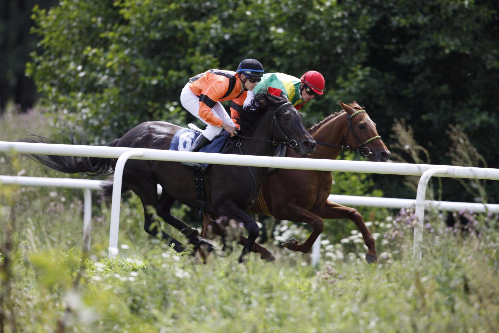 pferderennen bad harzburg