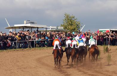 Wettstar Pferderennen