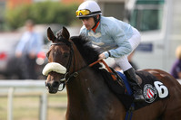105.000 Guineas für Sea The Moon-Hengst bei Tattersalls