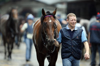 Dreijähriger Davidhoff-Sohn toppt Tattersalls National Hunt Sale in Irland