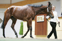 Deep Impact-Sohn der Dalicia siegt in Japan